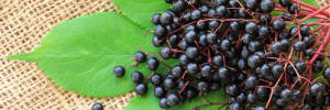 Elderberry flu remedies
