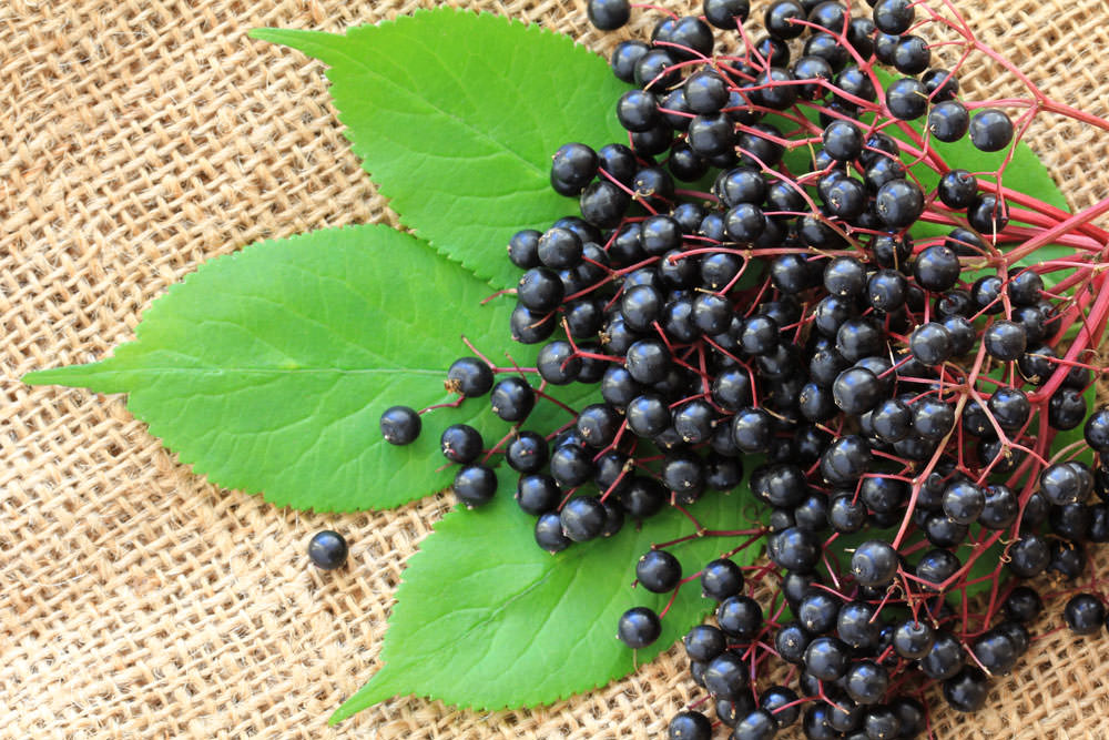 Elderberry flu remedies